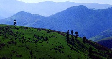 More information about Chaloos Forests