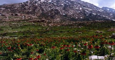More information about Dena Mountain, Hafshejan