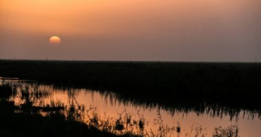More information about Shadegan Wetland