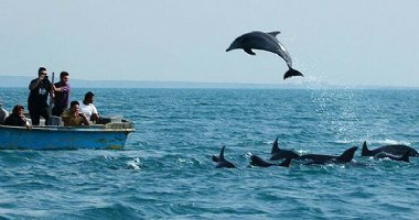 More information about Qeshm natural attractions in Qeshm Island