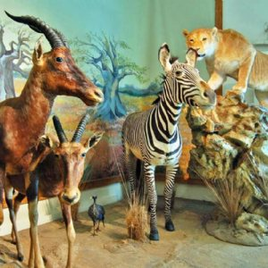 Iran Wildlife and Nature Museum - Dar Abad