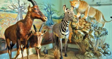 More information about Iran Wildlife and Nature Museum - Dar Abad