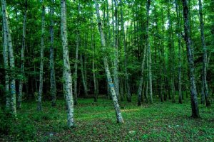 Neka Forests