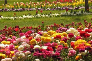 Isfahan Flower Garden