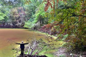 Hasal Swamp in Chalus Forests - Borth of Iran