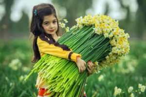 Persian Narcissus (Daffodil) Farms - Behbahan