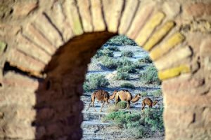 Kavir National Park and Wildlife