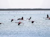 Iran tourism News: Migratory birds wintering in northern Iran increased by 30%