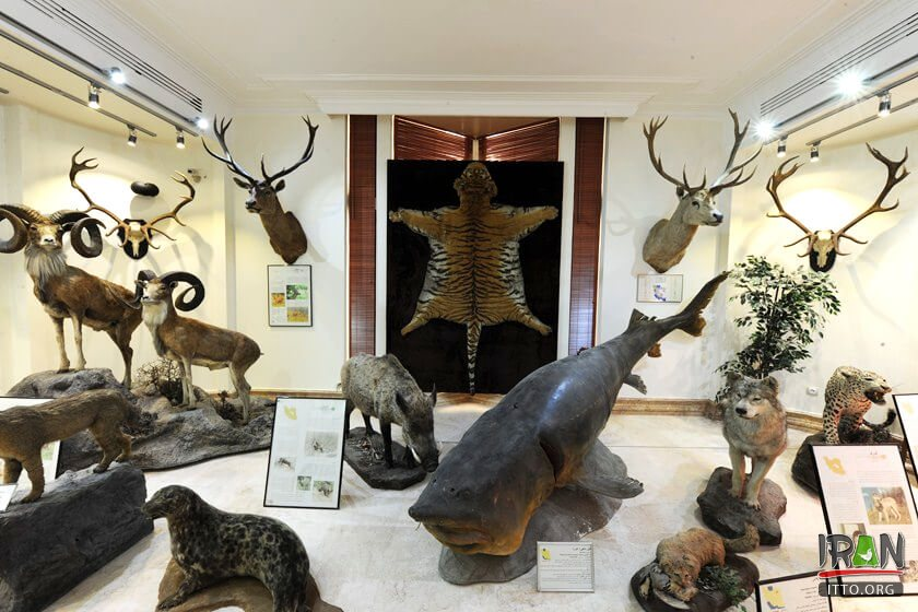 Natural Monuments and Wildlife Museum (Dar Abad),Iran Darabad Museum of Nature & Wildlife,Tehran's Nature and Wildlife Museum of Darabad,Darabad museum