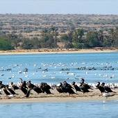 Heleh Protected Area near Bushehr
